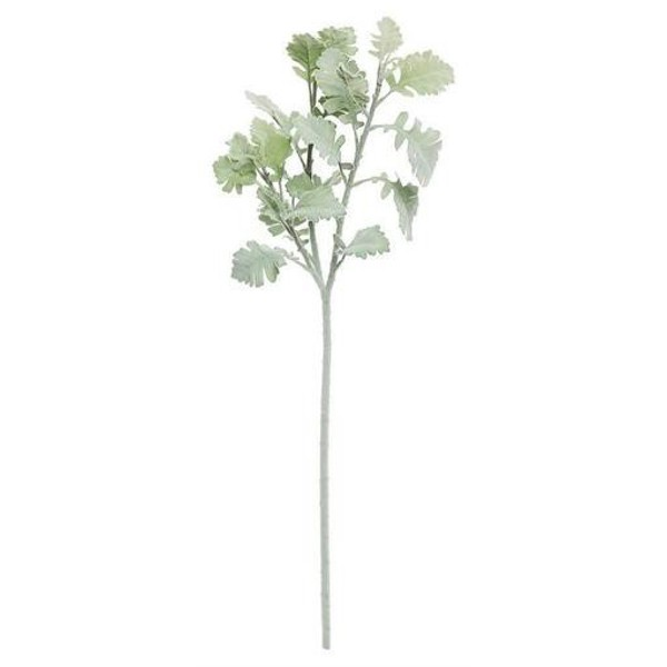Dusty Miller Stem