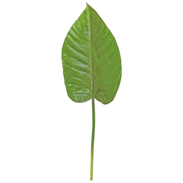 Tropical Philo Leaf
