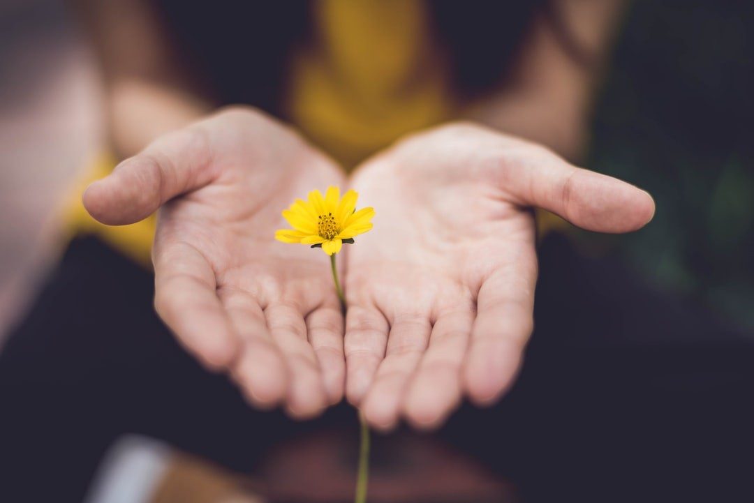 two hands, palm up, holding a yellow flower